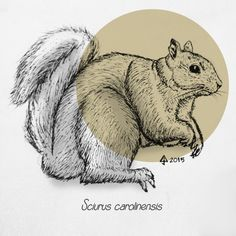 Grey Squirrel March 2015 Fauna Study pencil, pen and ink on drawing paper + photoshop 2 Pencil, Tigger, Squirrel, Disney Characters, Fictional Characters, March, Photoshop, Study, Ink
