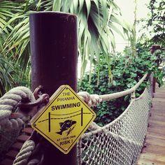 no kidding! they do have piranhas! nomnomnom... via @Nic Hildebrandt {luzia pimpinella}