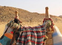 Bedouin camel saddle and blanket