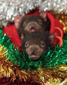 Devil Ark's Christmas Appeal🎄🎅🎁 - kitprendergast21@gmail.com - Gmail