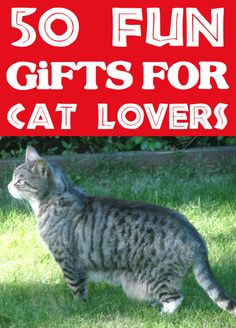 Cat Lover Gifts for Christmas! Cat Lovers Beware! You're about to find some sweet, some funny and some downright adorable gifts for cat lovers! Cat fanatics will go crazy for these fun presents this year! Go check some more gifts off your list... Cat Lover Gifts, Cat Gifts, Gift For Lover, Cat Lovers, Gifts For Girls, Gifts For Her, Grandpa Gifts, Funny Gifts, Stocking Stuffers