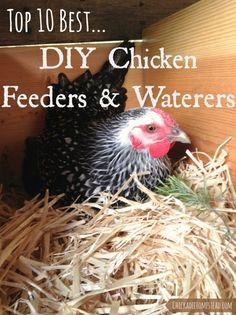 Top Ten Best DIY Chicken Waterers and Feeders | Chickadee Homestead (.com)::