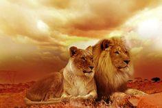 Löwen, Safari, Afika, Landschaft - Kostenloses Bild auf Pixabay