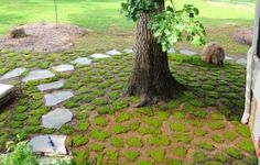 How to transplant and grow moss. Also the difference between Acrocarp and Pleurocarp Hillside Landscaping, Landscaping With Rocks, Side Garden, Lawn And Garden, Moss Lawn, Growing Moss, Yard Care, Garden Stones, Mousse