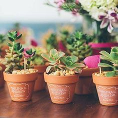 Mothers Day Or Spring Craft Pots With Hand Prints Sweet Succulents Photography Cynthia Chung Wedding