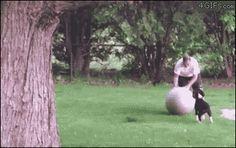【画像あり】飛んでるイッヌの画像貼りまくってもええか? : 暇人\(^o^)/速報 - ライブドアブログ