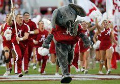 The Alabama Crimson Tide. The best football team on Earth :) lol