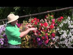 Standout Performers of 2014: Part 1 - Hanging Baskets - YouTube