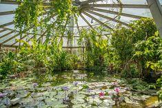 La serre tropicale, Parc de la Tête d'Or à Lyon Lyon France, Image News, City Break, Greenhouses, Web Images, Permaculture, Tourism, Trips, Landscape