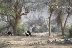 Doro Nawas Camp - Birdlife is excellent with several Namibian endemics, such as Damara Hornbill, Carp's Tit and Rüpell's Korhaan. Safari Adventure, August 2014, Bald Eagle, Habitats, Wilderness, Places To Visit, Wildlife, Africa, Camping