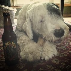 """Alpha King"" by 3 Floyds... Tastey ale with a smooth finish. Sheepdog Approved!"