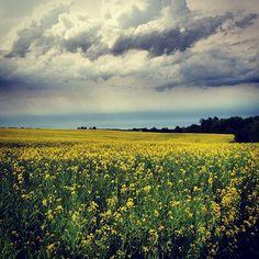 Rural North Dakota. Photo from the Instacanvas gallery of sonjakautzman.