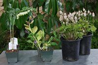 Outdoor and garden expert, Owen Reeves, tells us what plants, veggies and flowers are hot this season.