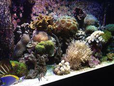 My Saltwater Coral Reef Aquarium :')