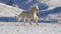Cavalo na Neve