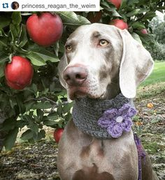 Infinity Dog Scarf Dog Neck Warmer Dog by LotsofSpotsBoutique