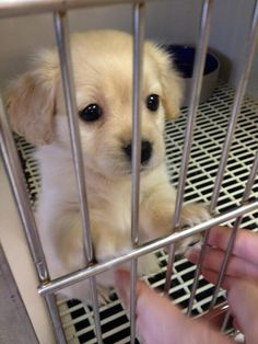 Now those are puppy dog eyes!