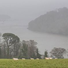 River Dart in the rain from Greenway Devon. #ukcoastwalkPhoto: Quintin Lake www.theperimeter.uk