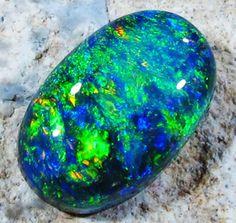 LIGHTNING RIDGE DARK OPAL 1.70 CTS [XR4] black opal ,fire opal , solid opal ,australian opal