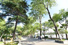 南京,玄武湖!