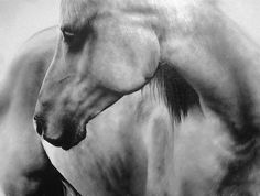 Award winning, luxury wildlife artwork by Carla Grace Art. Australia based artist Carla Grace paints breathtaking realistic wildlife paintings of animals from all over the globe. Grace Art, Picasso Art, Wildlife Paintings, Horse Print, Horse Pictures, Painting Techniques, Art Oil, Insta Art, Oil On Canvas