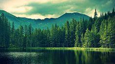 Resultado de imagen para forest