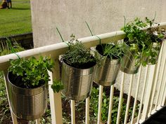 Herbs in coffee cans, hung with zip ties.Upcycled small-scale gardening!