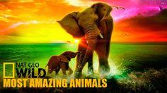 Nat Geo Wild Documentaries 2015 | Most Amazing Animals Part 1