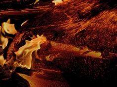 Robert Rich & Alio Die- Mycelia - YouTube