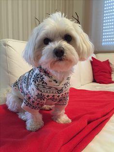 Hunde Foto: Johanna und Lilly - Schick gemacht.jpeg Hier Dein Bild hochladen: http://ichliebehunde.com/hund-des-tages  #hund #hunde #hundebild #hundebilder #dog #dogs #dogfun  #dogpic #dogpictures