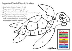 FREE Printable Loggerhead Colour by Numbers Pre School Color By Number Printable, Free Printable Numbers, Free Printables, Kids Colouring, Colouring Pages, Coloring Pages For Kids, Loggerhead Turtle, 1st Grade Math Worksheets, Color By Numbers