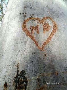 sign of love in a Eucalyptus Tree / Tolox - Málaga - Andalusia / Spain