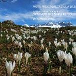 Top cover del mese di giugno- crocus.- by Andrea Piussi