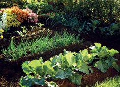 Tips for fall garden vegetables