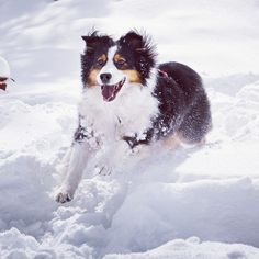 Our patrol dogs at Aspen Highlands broke the stoke meter on closing day.