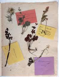 Un erbario di parole...l'antico fascino degli erbari botanici da utilizzare come copertine dei nostri libri più amati che magari necessitano di essere riparati (un'idea come sovraccoperta di copertine o dorsi ormai lisi dal tempo).