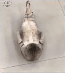 cat-sit-ups