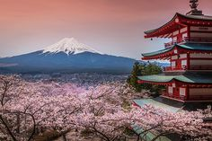 Find Chureito Pagoda Sakura Beautiful Mtfuji View stock images in HD and millions of other royalty-free stock photos, illustrations and vectors in the Shutterstock collection. Thousands of new, high-quality pictures added every day. Virtual Travel, Virtual Tour, Adachi Museum Of Art, Le Colorado, Himeji Castle, Photoshop, Beautiful Castles, Fabric Wall Art, Easy Install
