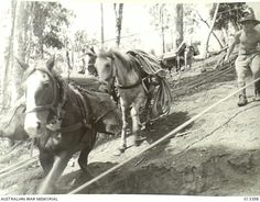 1942 New Guinea - pony power takes over where mechanical means cannot operate
