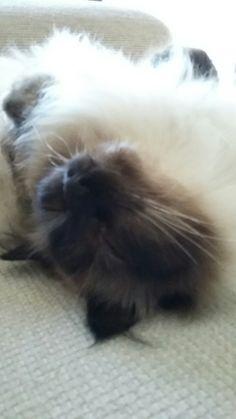 Having cat nap x