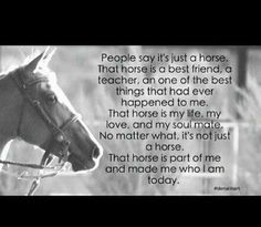 <3 You say it's just a horse? You just don't understand .