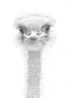 ostrich by David Smith