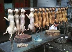 China's Dog Meat Festival Is NEXT WEEK (June 21st) - Will You Join The Voices Calling Out Against It?