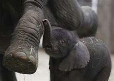 Elephant Babies..