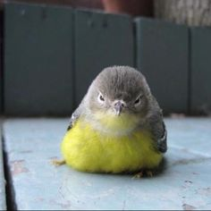 Uhhhh fluffy baby bird