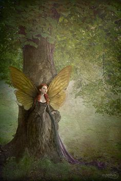 With butterfly wings / she emerges from the tree / to find her true love (estheia)