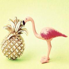 Flamingo and pineapple: instagram.com/aflamingoday