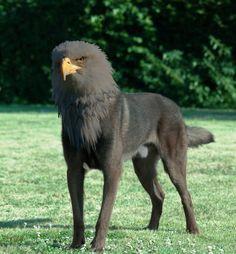 Alert bird dog (dark brown)