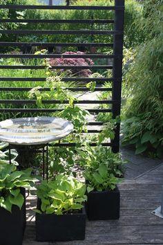 Zicht breken voor en achtertuin, beplanting Architectural Landscape Design