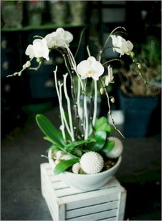 Cool Top 25 Orchid Arrangements Ideas To Enhanced Your Home Beauty https://hroomy.com/home-decor/top-25-orchid-arrangements-ideas-to-enhanced-your-home-beauty/
